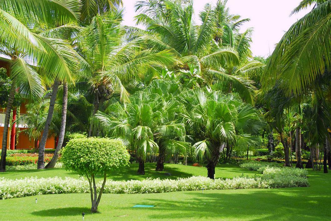 Природа Доминиканы