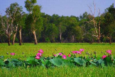 Парк Какаду - флора